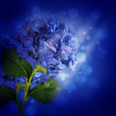 Flowers in a bouquet, blue hydrangeas and white flowers photo