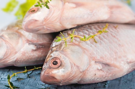 Raw European carp with a thyme and lemon, living fish Stock Photo - 16976720