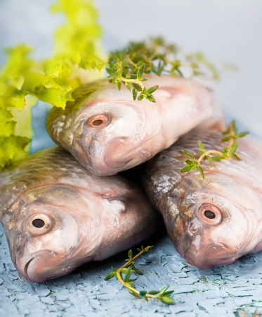 Raw European carp with a thyme and lemon, living fish Stock Photo - 16976714