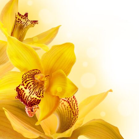 orchid flower: Orchids in the drops of dew on a white background