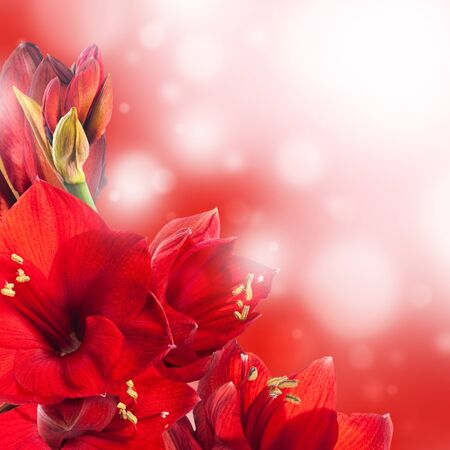 Red flowers, bouquet of gerber  photo