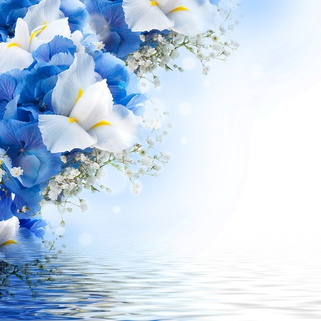 isolated irises: Flowers in a bouquet, blue hydrangeas and white irises Stock Photo