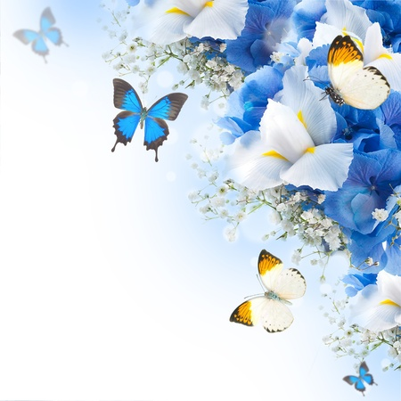Flowers and butterfly, blue hydrangeas and white irises Stock Photo