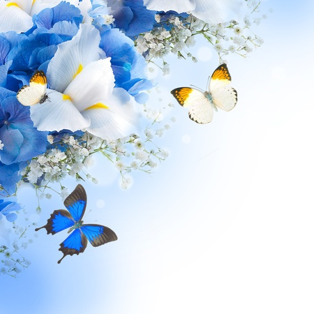 iris flower: Flowers and butterfly, blue hydrangeas and white irises Stock Photo