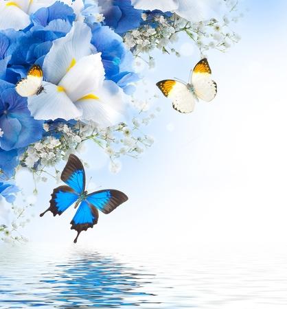 mariposas amarillas: Flores y mariposas, hortensias azules y lirios blancos Foto de archivo