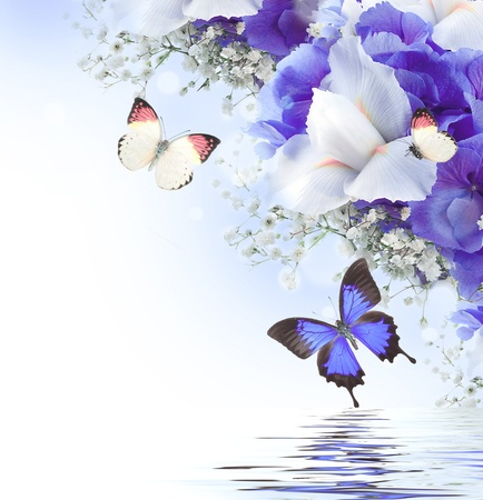 purple iris: Flowers and butterfly, blue hydrangeas and white irises Stock Photo