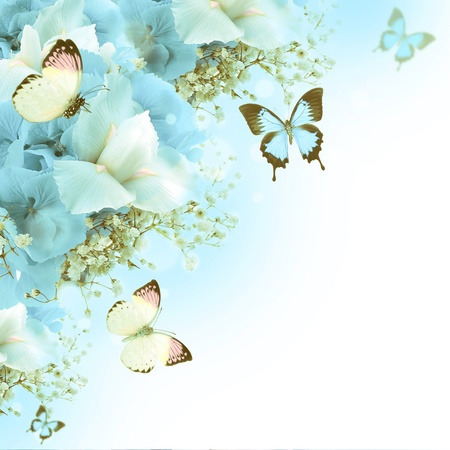 purple butterfly: Flowers and butterfly, blue hydrangeas and white irises Stock Photo