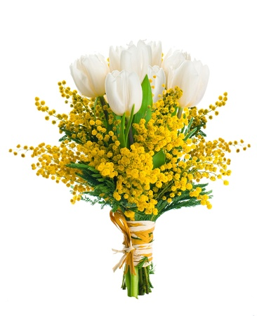 mimosa: White tulips with a mimosa, a background from flowers