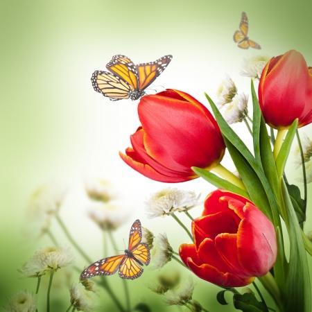 Bukiet czerwonych tulipanów na ciemnym tle i motyl