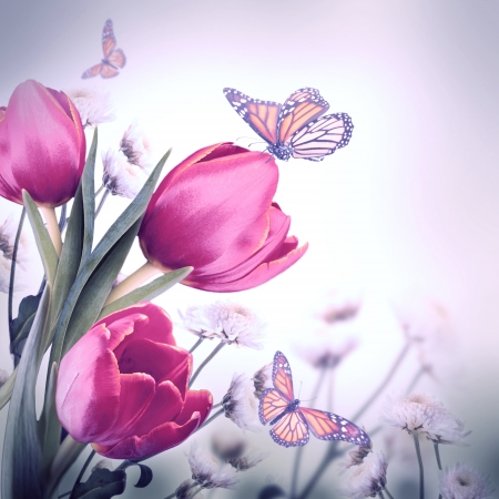 Bouquet of red tulips against a dark background and butterfly photo