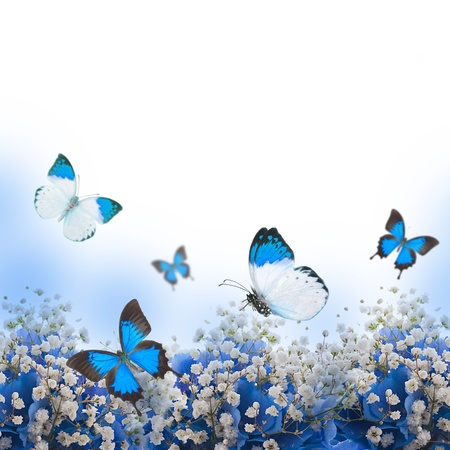 blue flower: Flowers in a bouquet, blue hydrangeas and butterfly