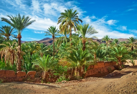 desert scenes: Oasis with palm trees in the middle of the desert