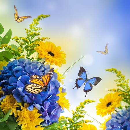 Bouquet from blue hydrangeas and  butterfly, a flower background photo