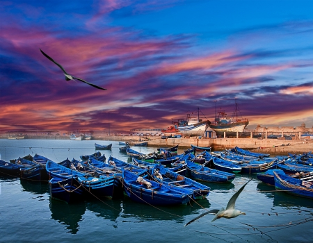 morocco: Blue fishing boats on an ocean coast in Essaouira, Morocco