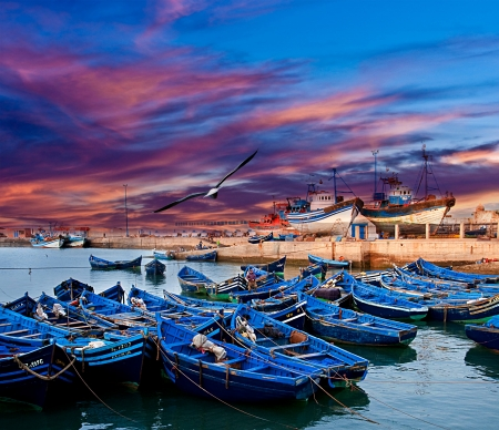 Blue fishing boats on an ocean coast in Essaouira, Morocco photo