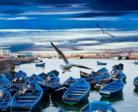 marina: Blue fishing boats on an ocean coast in Essaouira, Morocco