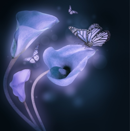 Multi-colored lilies and the butterfly on a dark background photo