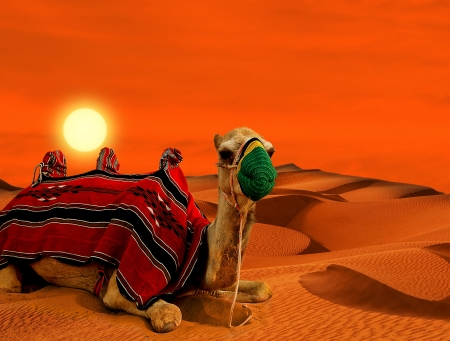 Tourist camel on sand dunes in the desert photo