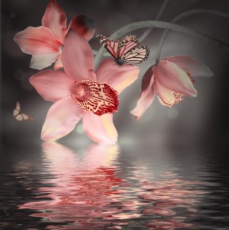 Orchideeën met een vlinder op de gekleurde achtergrond Stockfoto