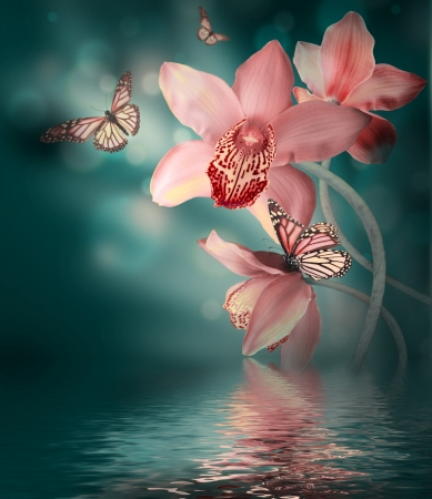 色付きの背景には、蝶のラン