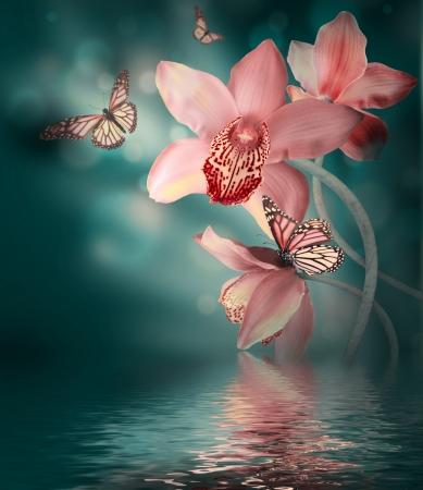 Orchidee con una farfalla su sfondo colorato Archivio Fotografico - 21568502
