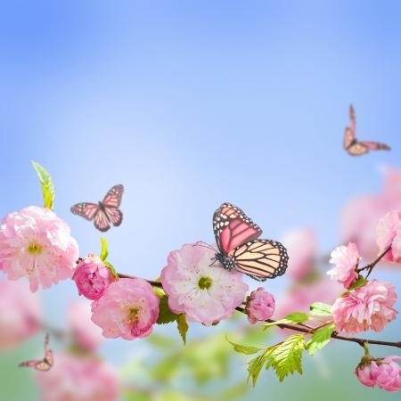 Roze bloem van een oosterse cherry en vlinder; Stockfoto