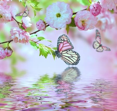 Pink flower of an Oriental cherry in and butterfly photo