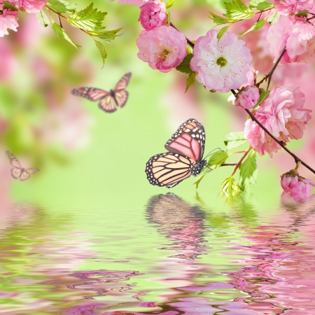 green butterfly: Pink flower of an Oriental cherry in and butterfly