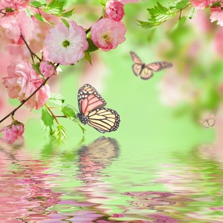 Fleur rose d'une cerise Oriental dans et papillon Banque d'images - 21568551