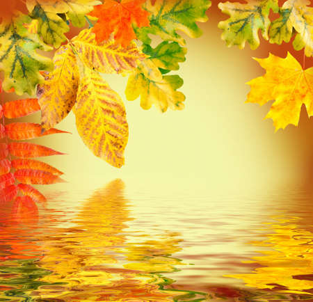 Autumn leaves on a yellow background photo