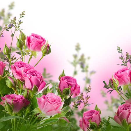 Bouquet of delicate roses, floral background photo