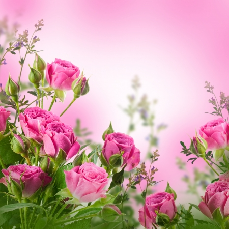 bouquet fleur: Bouquet de roses d�licates, fond floral