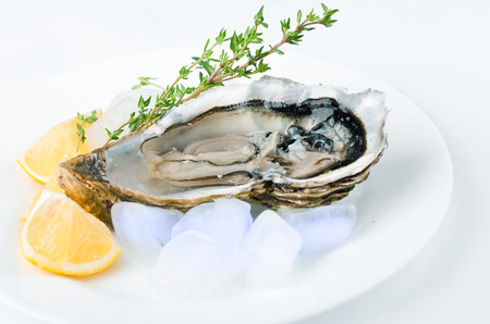 Fresh oysters with lemon and ice photo