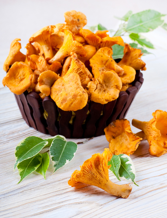 Chanterelle mushrooms in a basket with forest leaves photo
