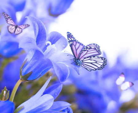 Flowers on a white background, dark blue hand bells and butterfly photo