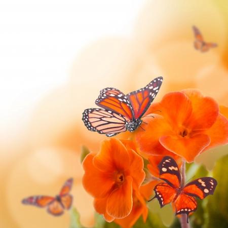 mariposas amarillas: Flores de color amarillo y la mariposa, una primavera de primavera