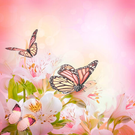 butterfly on flower: Beautiful flower and butterfly, blured and colored Stock Photo