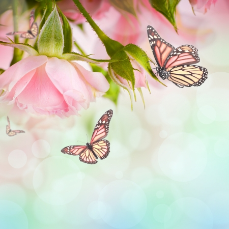 butterfly flower: Beautiful roses and butterfly, flower, floral background