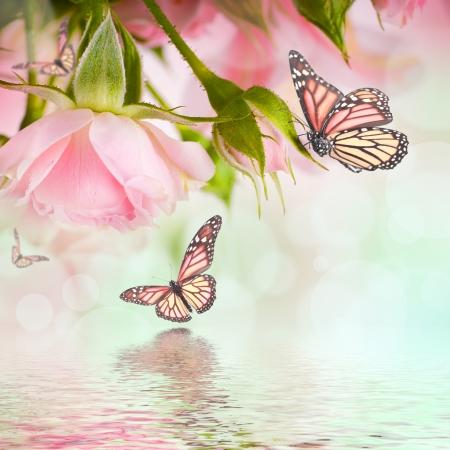 papillon rose: Belles roses et papillon, fleur, fond floral