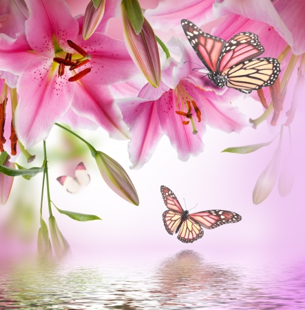 Multi-colored lilies and butterfly on a dark background photo