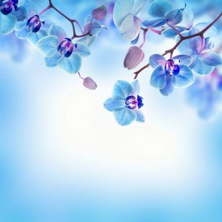 열대 난초의 꽃 배경