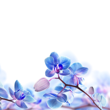 purple orchid: Floral background of tropical orchids