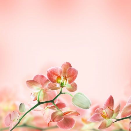 Floral background of tropical orchids photo