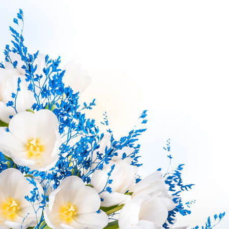 White tulips with blue grass. Floral background. photo