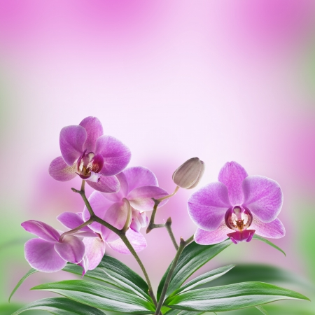 orchid flower: Floral of tropical orchids