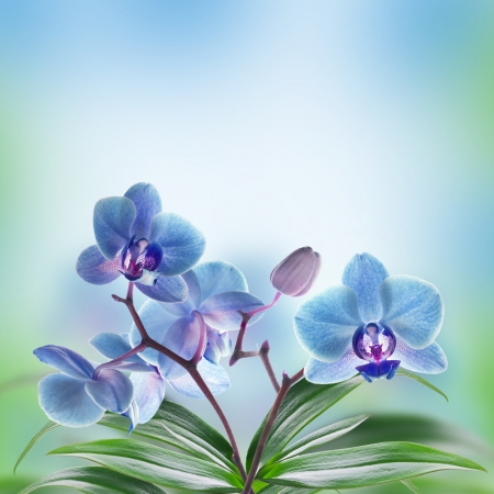 Floral of tropical orchids