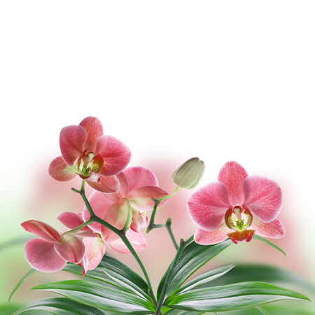 Floral of tropical orchids photo