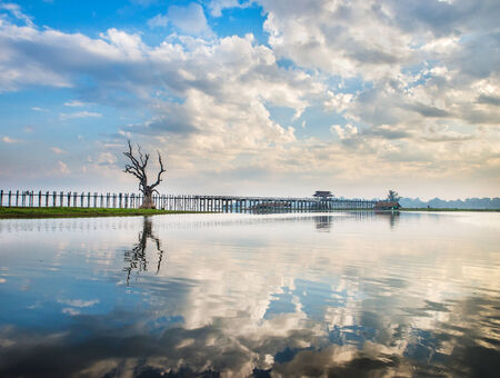 Lonely tree on a lake in Myanmar photo