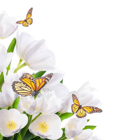 White tulips with green grass and  butterfly.  photo
