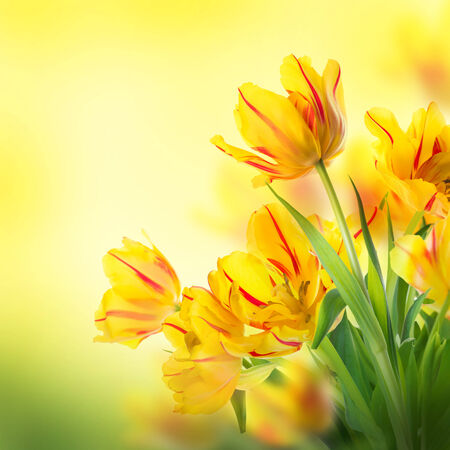 Red tulips with green grass. Floral background. photo